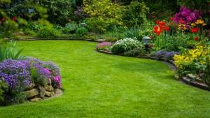 Ein schöner Rasen